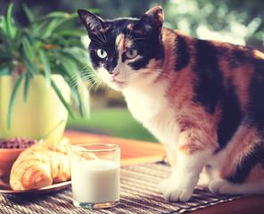 Gatto sulla tavola