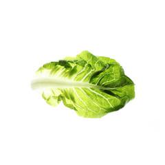 salatblatt Salatherz Romana