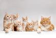 canvas print picture - kitten