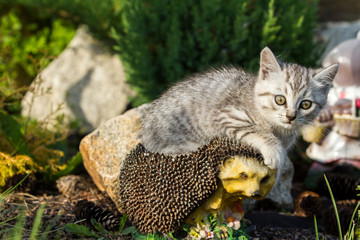 Kitten sitting on artificial hedgehog