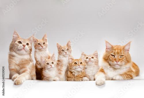 canvas print picture kitten