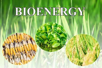 Bioenergy wording for background