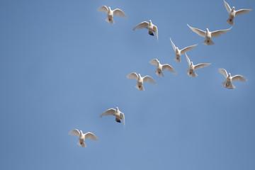 Tauben Fliegen Symbol Kreuz