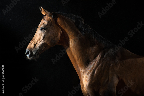 Foto op Canvas Paardensport Red horse in the night under the rain