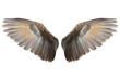 Leinwanddruck Bild - Wings
