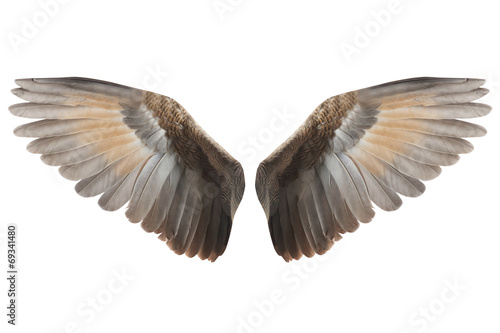 Deurstickers Vogel Wings
