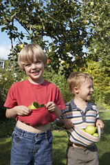 Two boys (3-6) standing beneath apple tree in garden, holding apples in t-shirts, smiling