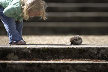 Girl (3-5) looking at hedgehog beside steps, side view, low section