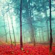 Obrazy na płótnie, fototapety, zdjęcia, fotoobrazy drukowane : Colorful mystic autumn trees