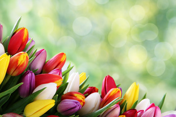 fototapeta bukiet kolorowych tulipanów