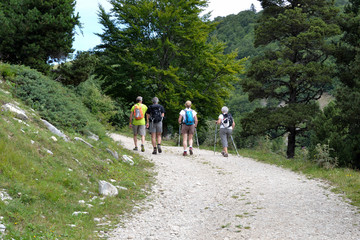 Promeneurs en forêt