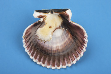 Inside of scallop shell.