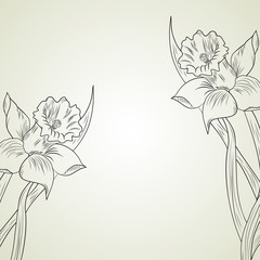 Daffodil flower or narcissus
