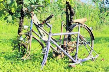 old bike in the vineyard