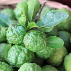 Kaffir lime or leech lime