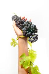 grappolo d'uva in mano