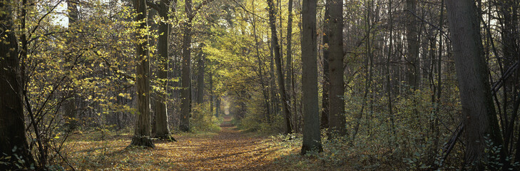 Forest path, near Chantilly, France