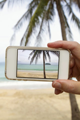 Taking photograph of palm tree with mobile cell phone