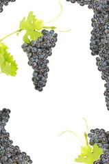 composizione d'uva  su sfondo bianco