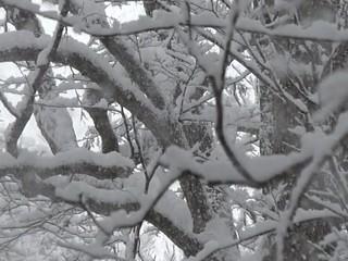 雪が降る森の風景_7