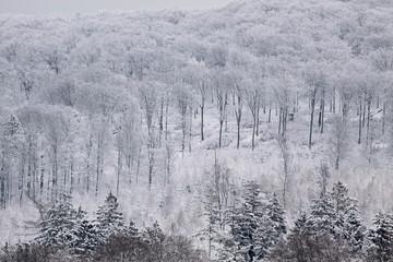 Verschneiter Winterwald im Taunus