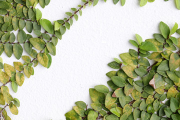 The Green Creeper Plant on a White Wall