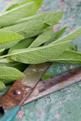 fresh sage on wooden surface