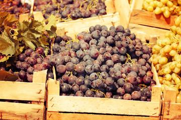 Vintage toning blue wine grapes
