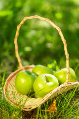 Basket with green apples on the grass
