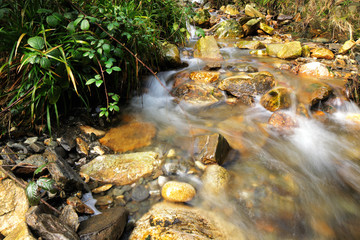 Stream in the forest surrounded by a beautiful scenics