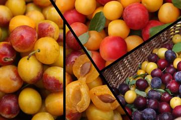 Quetsche Mirabelle Prune  - Fruits d'été