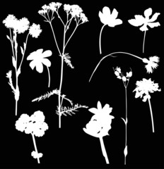 ten wild flowers on black illustration