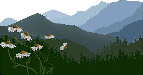 chamomile flowers in green mountains