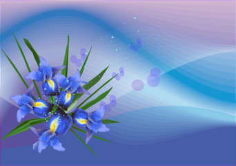 composition with blue iris flowers