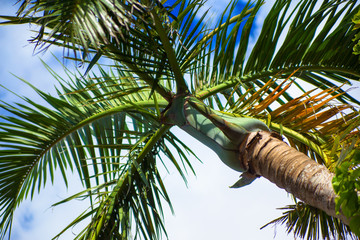 Palm tree in Summer