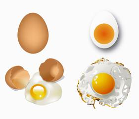 Vector of eggs