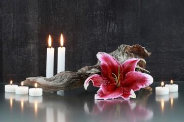 Stilleben : Kerzen, Lilie, Wurzelholz