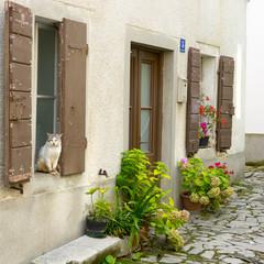 Cat sitting on an old window, Buzet, Croatia
