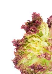 Fresh red lettuce salad.