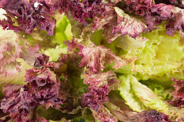 Fresh red lettuce as a background.
