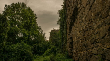 Transylvania, abandoned castle covered in ivy  tracking forward