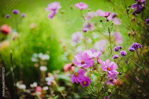 canvas print picture Sommerblumen