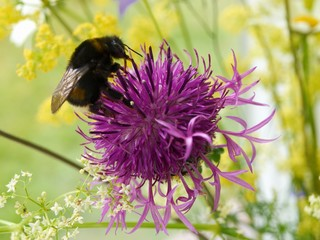 Bumblebee on a bouquet of wild flowers
