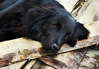 Lonely black dog waiting someone on outdoors