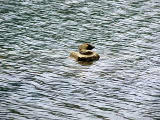 Duck shape stone in middle of water reservoir