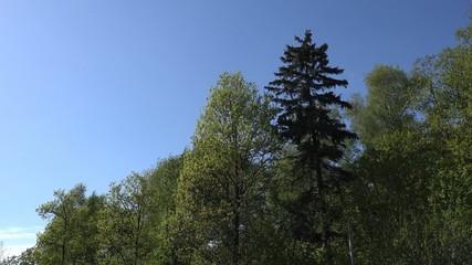 Forest background, 4K