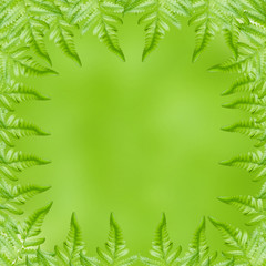 fern leaf on green background
