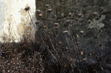 dry grass against the wall