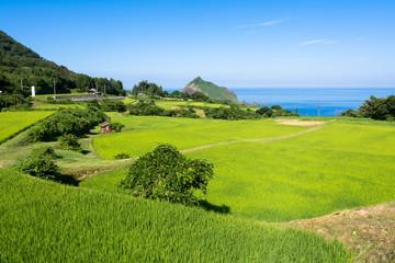 佐渡ヶ島の田園風景