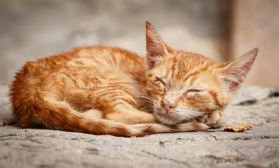 Little abandoned cat